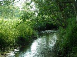 Fließgewässer im Röderbachtal
