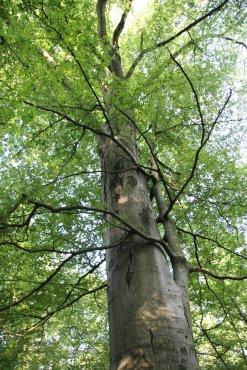Foto eines Baumes