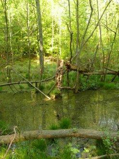 Foto aus dem Wald